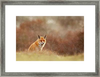 Red Fox In A Snow Shower Framed Print by Roeselien Raimond