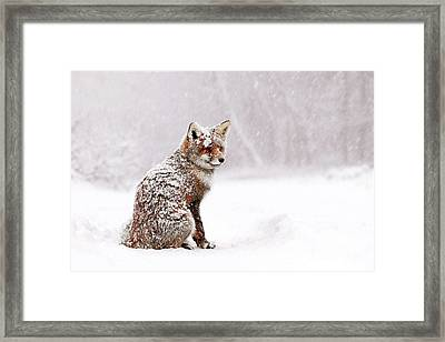 Red Fox In A White Winter Wonderland Framed Print by Roeselien Raimond
