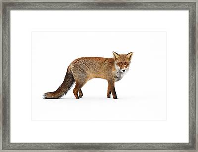 Red Fox In A White World II Framed Print by Roeselien Raimond