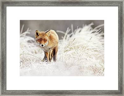 Red Fox In A Winter Landscape Framed Print