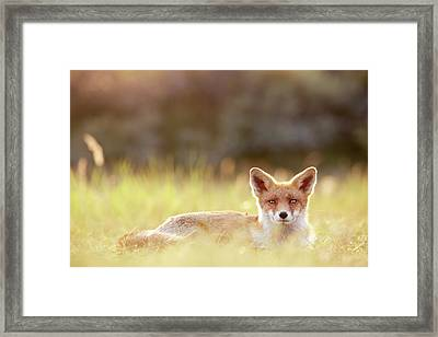 Red Fox In Late Summer Framed Print