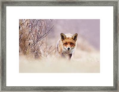 Red Fox In Pastels Framed Print by Roeselien Raimond