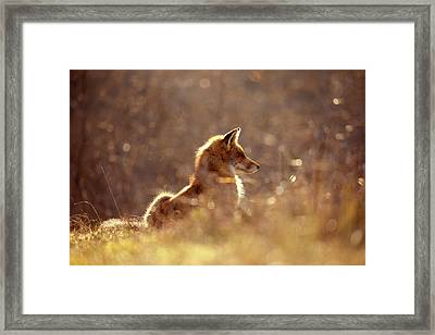 Red Fox In The Sun Framed Print by Roeselien Raimond