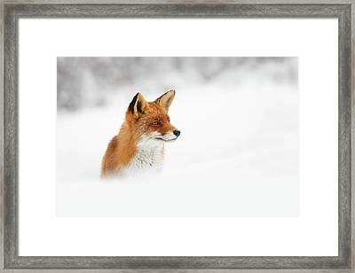 Red Fox Out Of The Blue Framed Print by Roeselien Raimond