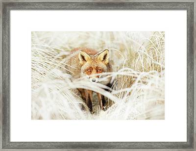 Red Fox Out Of The White Framed Print by Roeselien Raimond