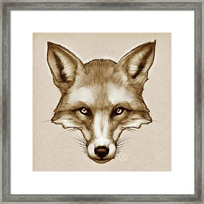 Red Fox Sketch Framed Print