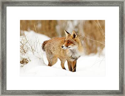 Red Fox Standing In The Snow Framed Print by Roeselien Raimond