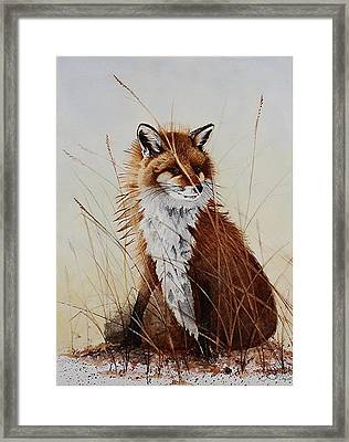 Red Fox Waiting On Breakfast Framed Print