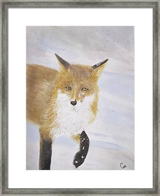 Red Fox Walk Framed Print by Annie Poitras