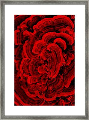Red Fungi Framed Print by Dana  Oliver