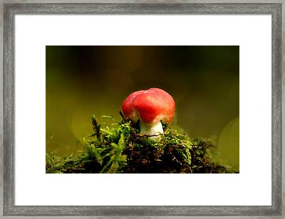 Red Fungus Framed Print by Heike Hultsch