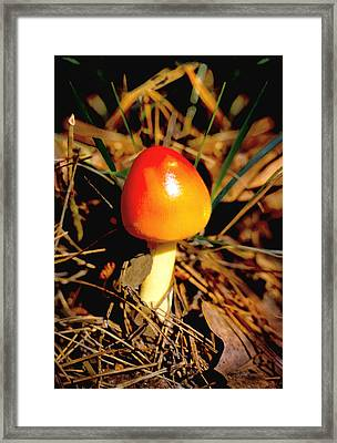Red Fungus Framed Print