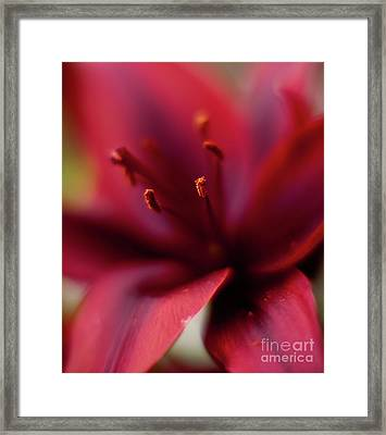 Red Gazer Framed Print by Mike Reid