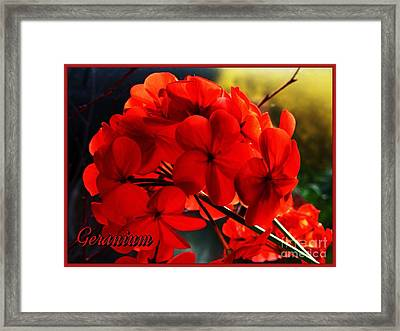 Red Geranium Framed Print