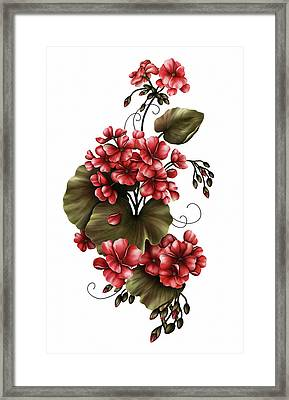 Red Geraniums On White Framed Print