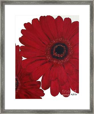 Red Gerber Daisy Framed Print by Marsha Heiken