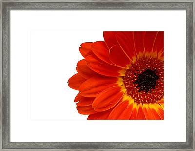 Red Gerbera Daisy Flower Framed Print