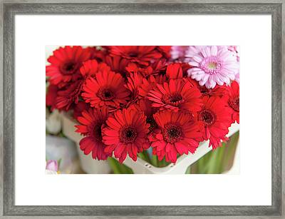 Red Gerberas At Amsterdam Flower Market Framed Print by Jenny Rainbow