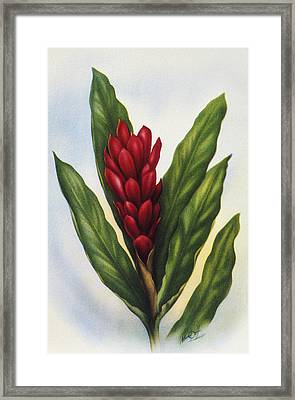 Red Ginger Framed Print by Hawaiian Legacy Archive - Printscapes