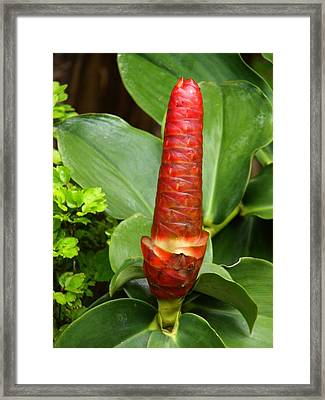 Red Framed Print by Glenda  Jones