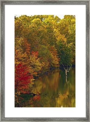 Red Gold And Green Framed Print by Edward Kreis