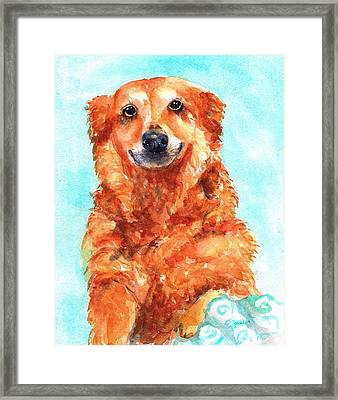 Red Golden Retriever Smile Framed Print