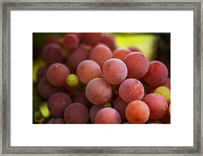 Red Grapes Close Up Framed Print