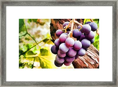 Red Grapes In The Vineyard With Boke Framed Print by Lanjee Chee