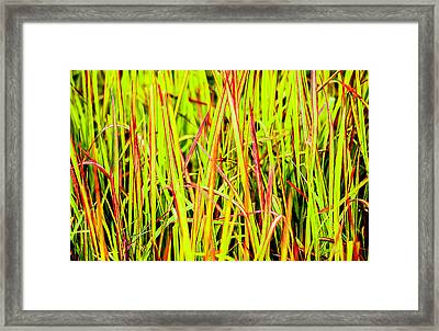 Red Green And Yellow Grass Framed Print