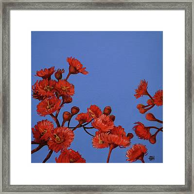 Red Gum Blossoms Framed Print