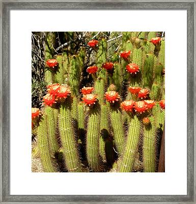 Red Hats Framed Print by Jeanette Oberholtzer