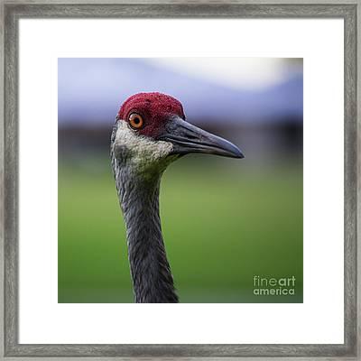 Red Head Bird Framed Print