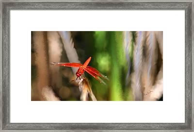 Red Heart Dragonfly Framed Print