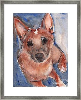 Red Heeler Pup Framed Print by Maria's Watercolor