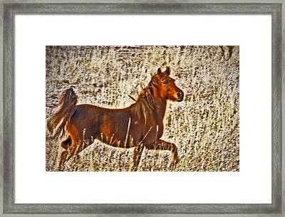 Red Horse Art Framed Print by James Steele