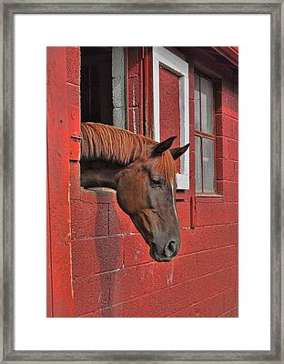 Red Horse Framed Print by JAMART Photography