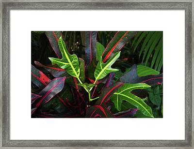 Red Hot And Green Framed Print