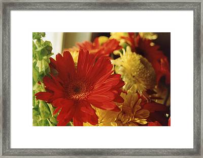 Red Hot Framed Print by Jan Amiss Photography
