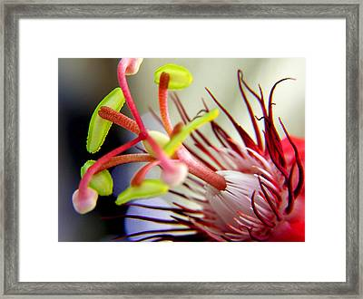 Red Hot Passion Framed Print