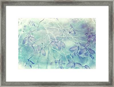 Red Huckleberry Blues  Framed Print