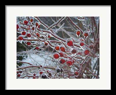 Berries Natural Ice Framed Prints