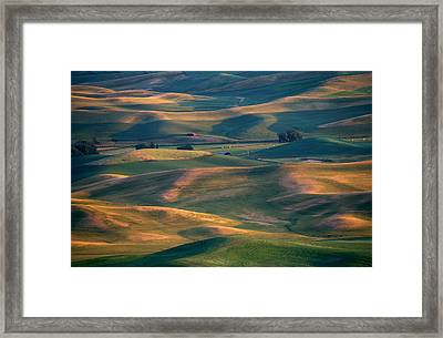Red In A Sea Of Green Framed Print by Mike  Dawson
