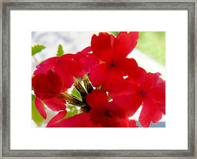 Red In The Garden Framed Print