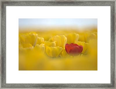 Red In Yellow L085 Framed Print by Yoshiki Nakamura