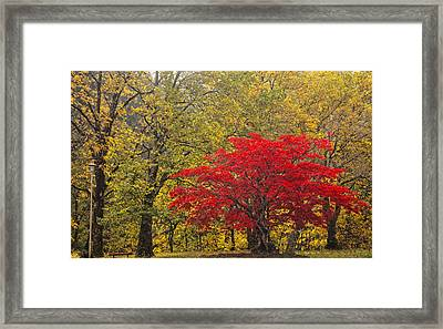 Red Into Yellow Framed Print