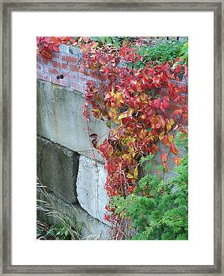 Red Ivy Framed Print by Gene Ritchhart