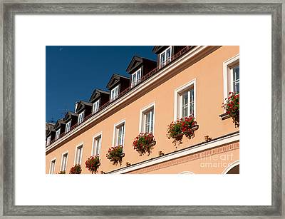 Red Ivy Leaved Geranium Bunches Framed Print