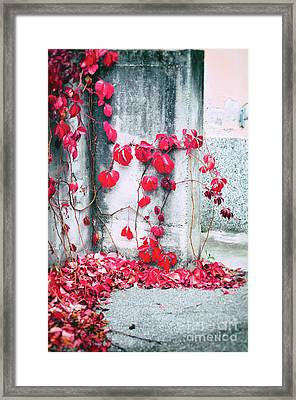 Red Ivy Leaves Framed Print by Silvia Ganora