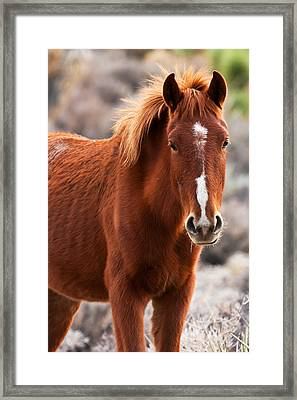 Red Framed Print by James Marvin Phelps