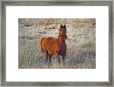 Red Framed Print by James Steele